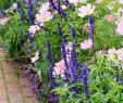 Blumenwiese Im Garten Elegant Best Diy Cottage Garden Ideas From Pinterest 26