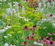 Blumenwiese Im Garten Elegant Bettina Jaugstetter – Büro Für Landschaftsarchitektur