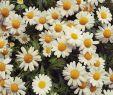 Blumenwiese Im Garten Frisch Manchmal Darf Man Blumen Sprechen Lassen Schönen Abend Euch
