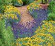 Blumenwiese Im Garten Neu Beeteinfassungen Aus Kräutern