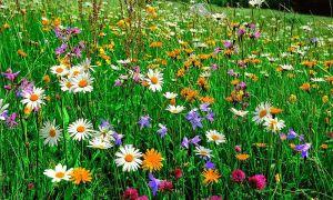 34 Frisch Blumenwiese Im Garten Neu