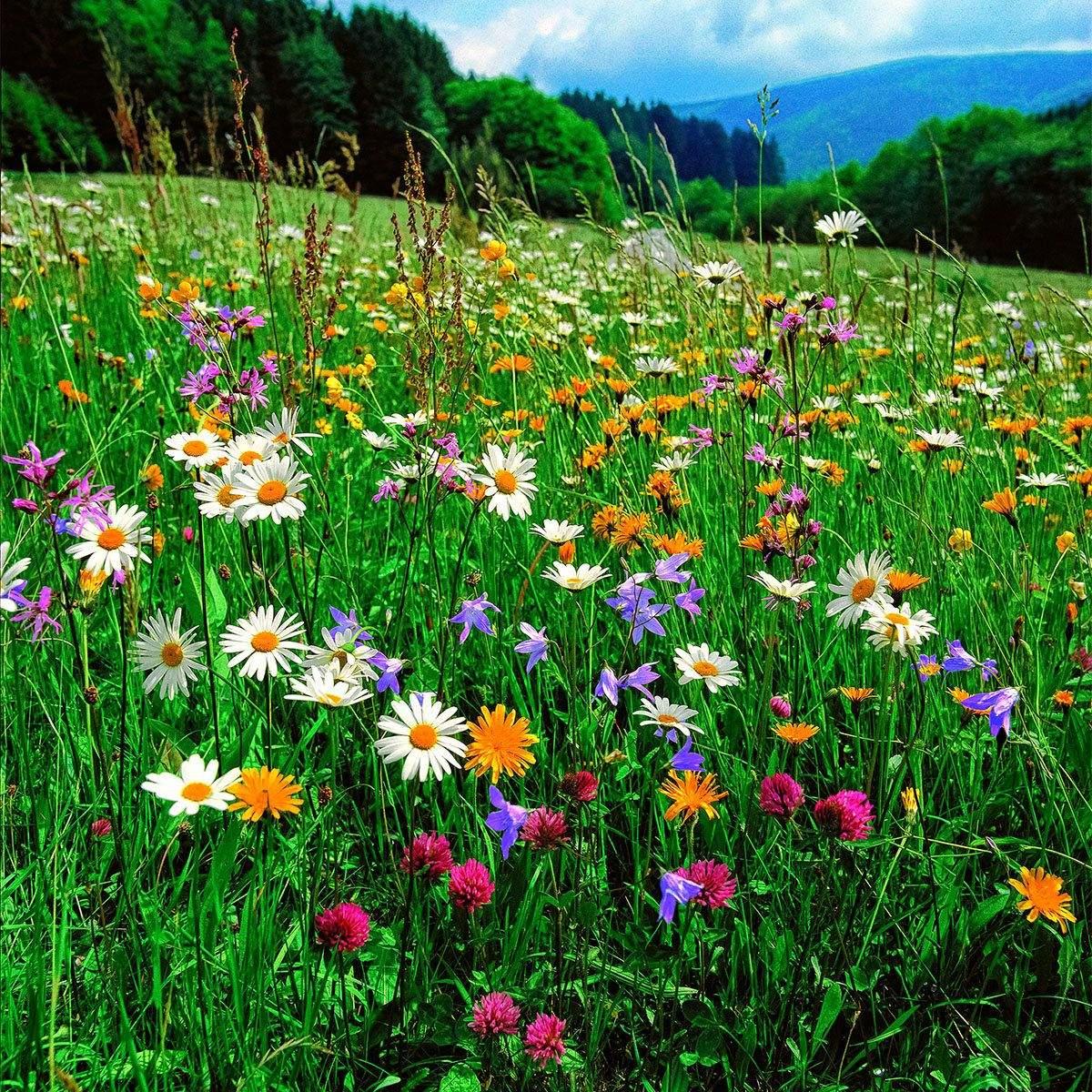 Blumenwiese Im Garten Reizend Blumenwiese 500 G