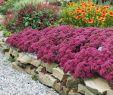 Blumenwiese Im Garten Reizend Setpreis 8 Pracht Stauden