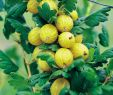 Bodendecker Garten Neu Stachelbeeren Im Garten Pflegen – Gesund Und Lecker