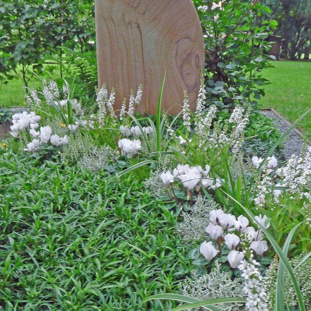 Bodendecker Garten Schön Bodendecker Die Pflegeleichte Grabbepflanzung