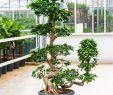 Bonsai Garten Traunreut Reizend Bonsai Garden Baume Fur Den Vorgarten Bonsai Baum