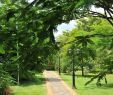 Botanische Garten Berlin Neu Summerfield Botanical Garden Bewertungen Fotos