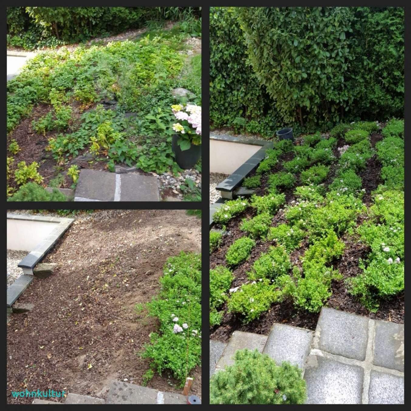 Botanische Garten Berlin Reizend Terrasse Am Hang Temobardz Home Blog Garten Anlegen