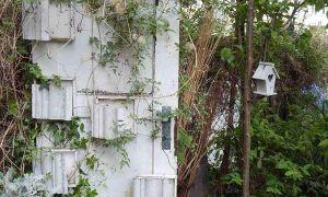 37 Luxus Botanische Garten Berlin Elegant