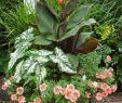 Botanischer Garten Amsterdam Das Beste Von 27 Reizend Lilien Im Garten Neu