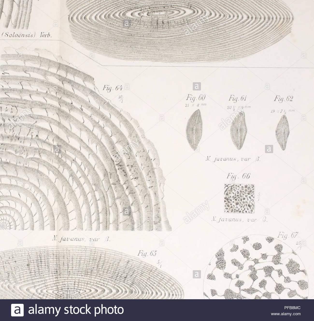 beschreibung gologique de java et madoura geologie geologie vulkane foraminiferen fossil auai anus var k javanus var1 fnj 67 68 xummuhtes javanus va j verb 0 v jaianu s i ar3 bitte beachten sie dass se bilder sind von der gescannten seite bilder digital fur lesbarkeit verbessert haben mogen farbung und aussehen ser abbildungen konnen nicht perfekt dem original ahneln extrahiert verbeek r m rogier derik marius 1845 1926 fennema rinder 1849 1926 amsterdam j g stemler cz pfb8mc