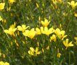 Botanischer Garten Augsburg Schmetterlinge Luxus Naturfotografie