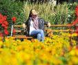 Botanischer Garten Basel Schön Gärten Und Parks Freiburg & Umgebung Badische Zeitung Ticket