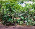 Botanischer Garten Berlin öffnungszeiten Einzigartig Botanischer Garten Marburg Gewächshäuser Botanischer