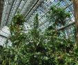 Botanischer Garten Berlin öffnungszeiten Elegant Grossestropenhaus Innen