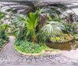 Botanischer Garten Berlin öffnungszeiten Elegant Palmengarten Botanischer Garten