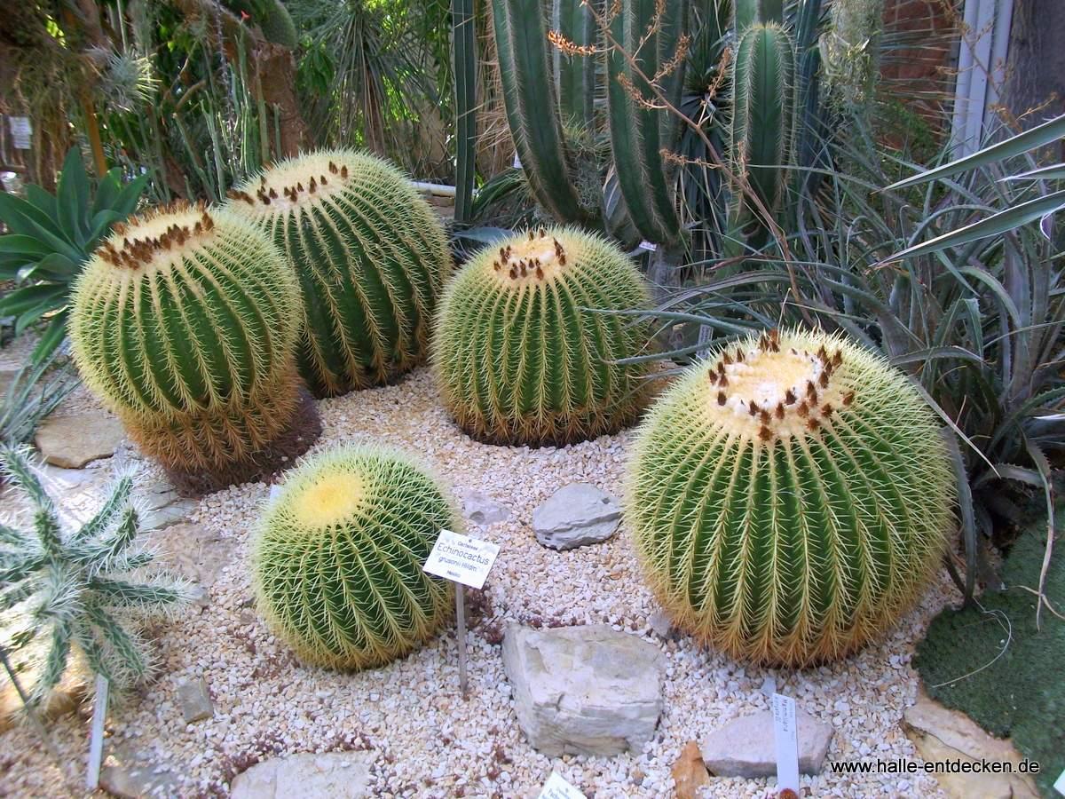 botanischer garten halle saale