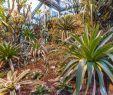Botanischer Garten Berlin öffnungszeiten Inspirierend Botanischer Garten Und Botanisches Museum Berlin Dahlem