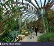 Botanischer Garten Berlin Steglitz Frisch Lichterfelder Stockfotos & Lichterfelder Bilder Alamy