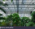 Botanischer Garten Berlin Steglitz Inspirierend Tropenhaus Stock S & Tropenhaus Stock Alamy