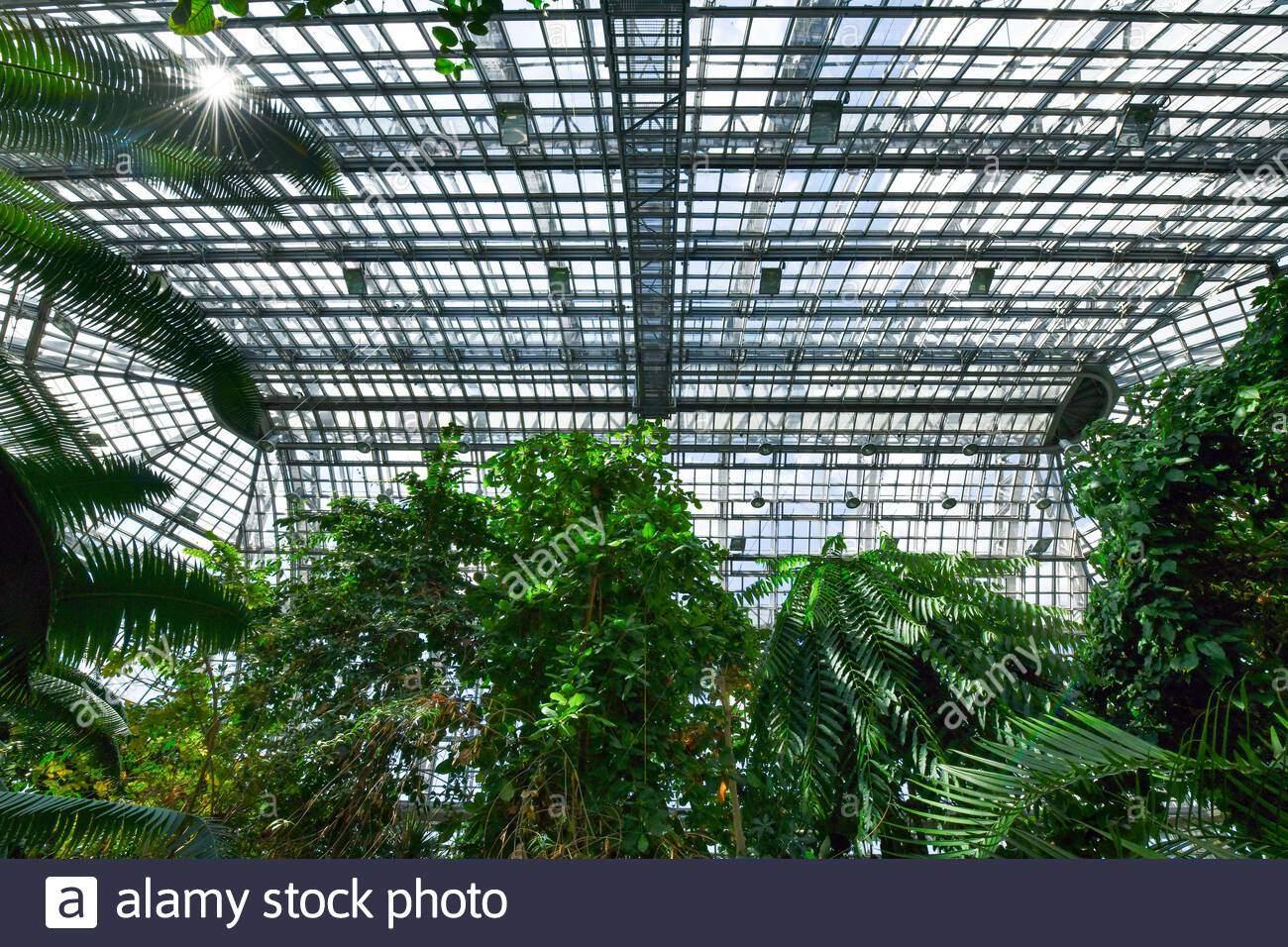 groes tropenhaus botanischer garten knigin luise strae lichterfelde steglitz zehlendorf berlin deutschland 2ADCP64