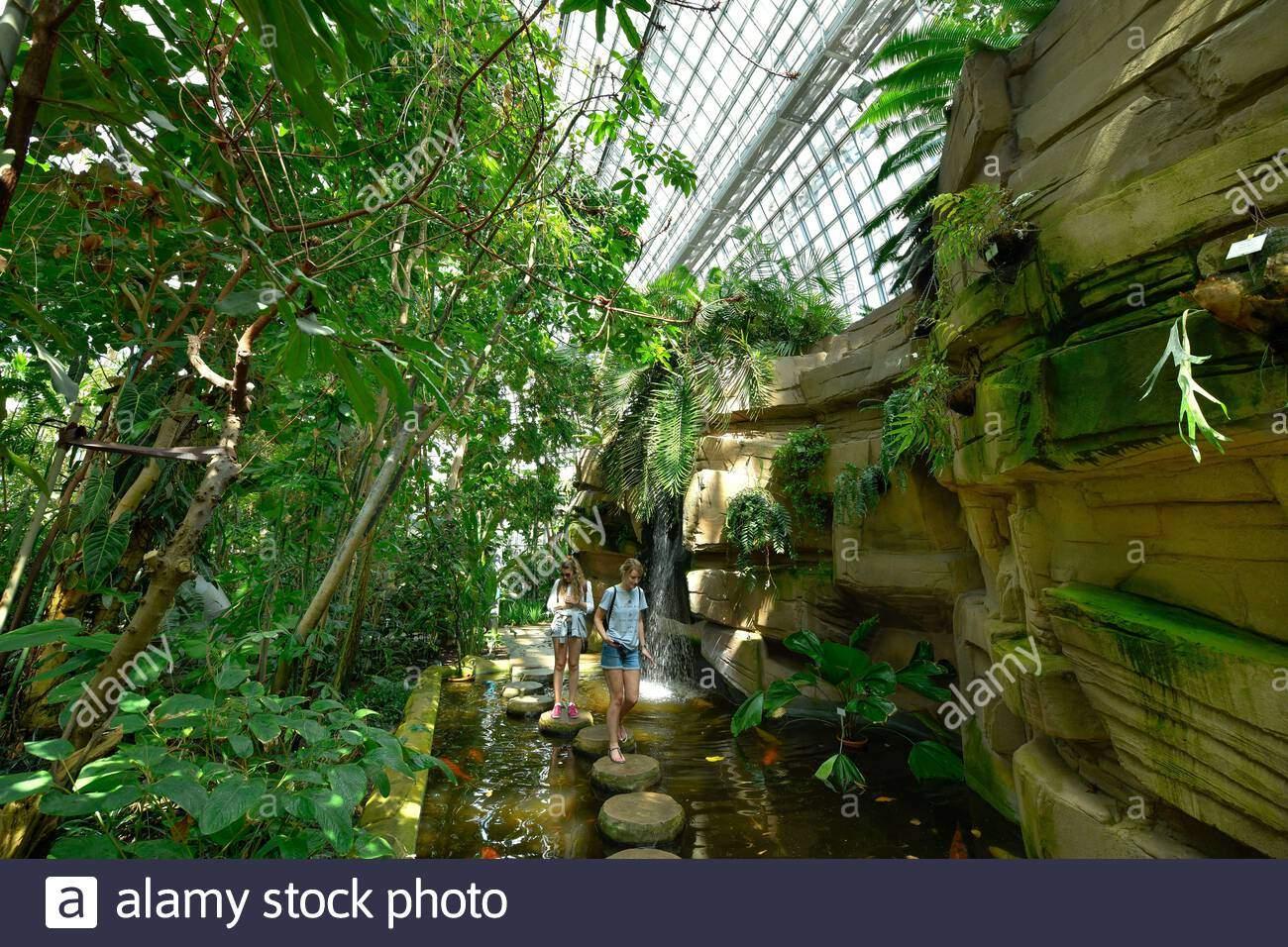 groes tropenhaus botanischer garten knigin luise strae lichterfelde steglitz zehlendorf berlin deutschland 2ADCP0C