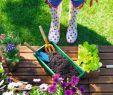 Botanischer Garten Eschwege Luxus 28 Reizend Garten Oase Frisch