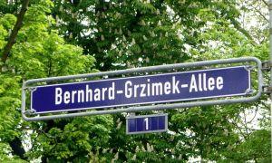 32 Luxus Botanischer Garten Frankfurt Am Main Neu