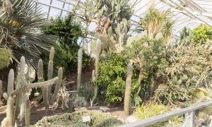 32 Einzigartig Botanischer Garten Halle Luxus