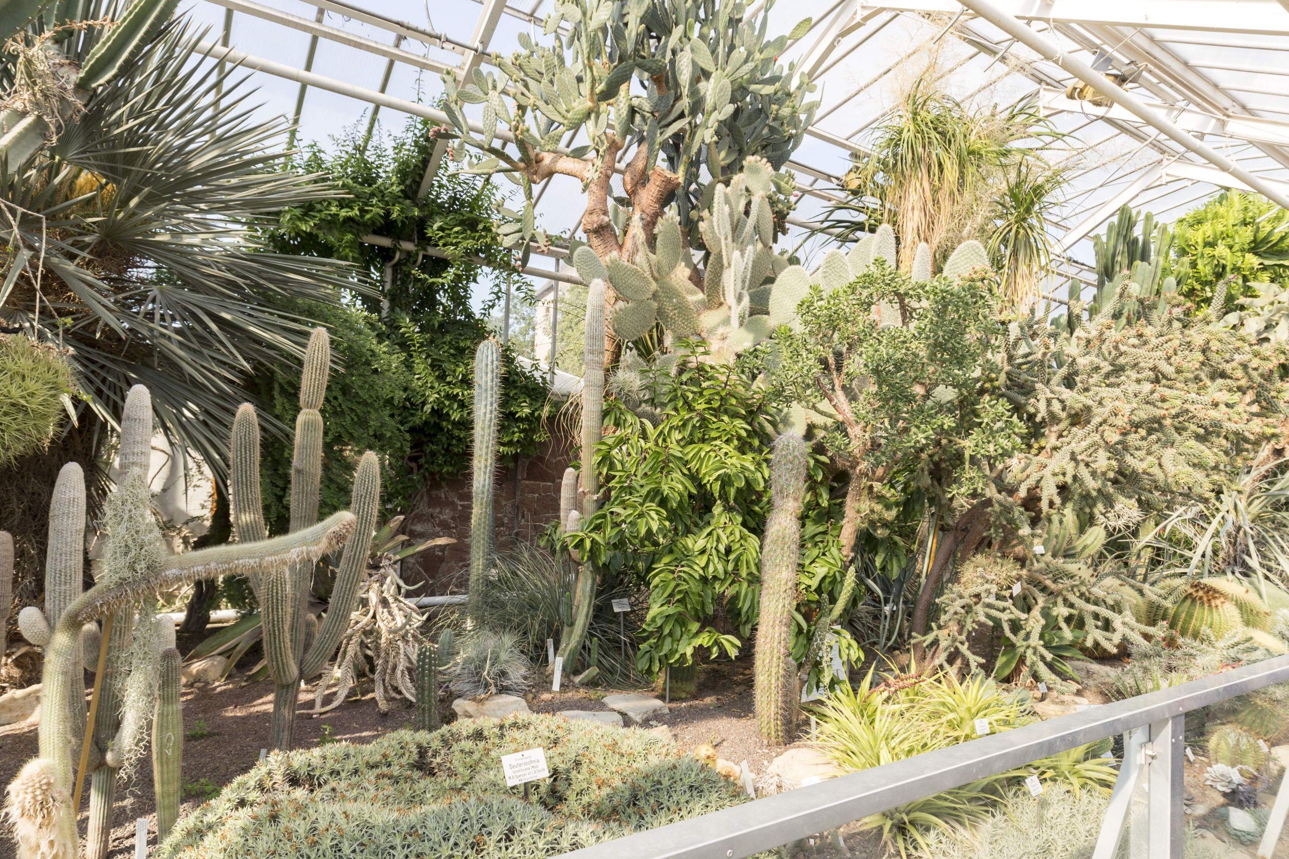 Botanischer Garten Halle Einzigartig File Botanischer Garten In Halle Saale Im Sukulentenhaus