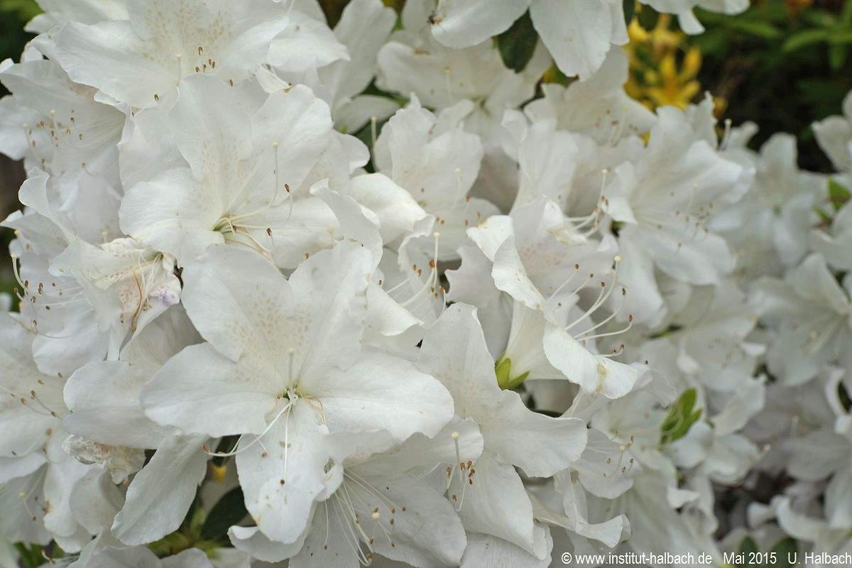 Botanischer Garten Halle öffnungszeiten Genial Botanischer Garten In Halle An Der Saale