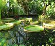 Botanischer Garten Halle öffnungszeiten Genial Botanischer Garten In Halle Saale Entdecken