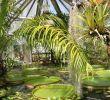 Botanischer Garten Halle öffnungszeiten Genial Botanischer Garten Kultur Und Freizeit