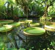 Botanischer Garten Halle öffnungszeiten Inspirierend Botanischer Garten In Halle Saale Entdecken