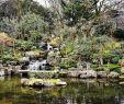 Botanischer Garten Karlsruhe Frisch 37 Das Beste Von Botanischer Garten London Schön