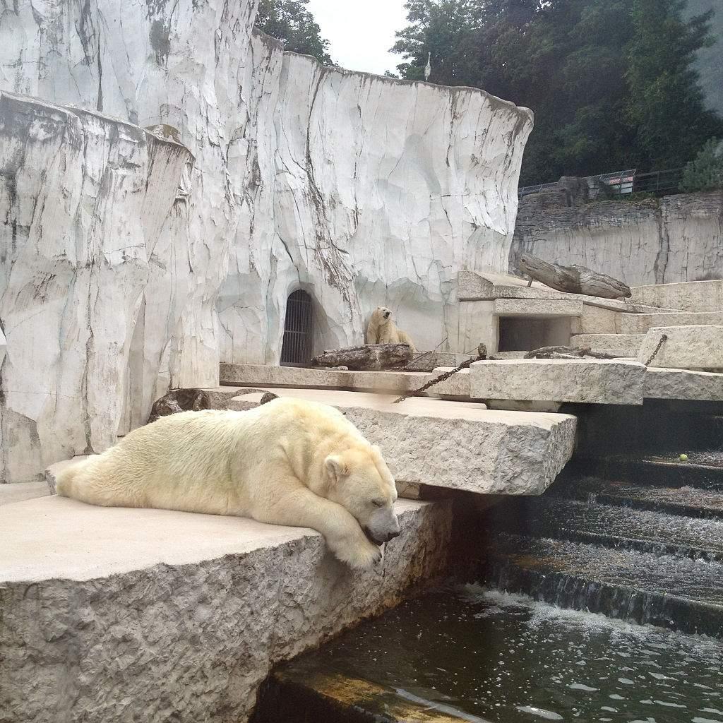 1024px Polar bear at Karlsruhe Zoo