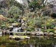 Botanischer Garten London Frisch Insider Tipps London Reise Badische Zeitung