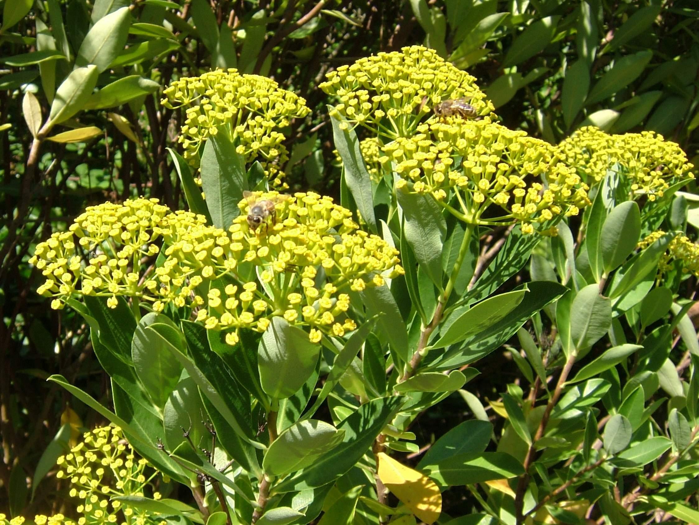 2008 07 Botanical Garden Meran R0209