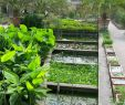 Botanischer Garten Padua Luxus Bot Garten
