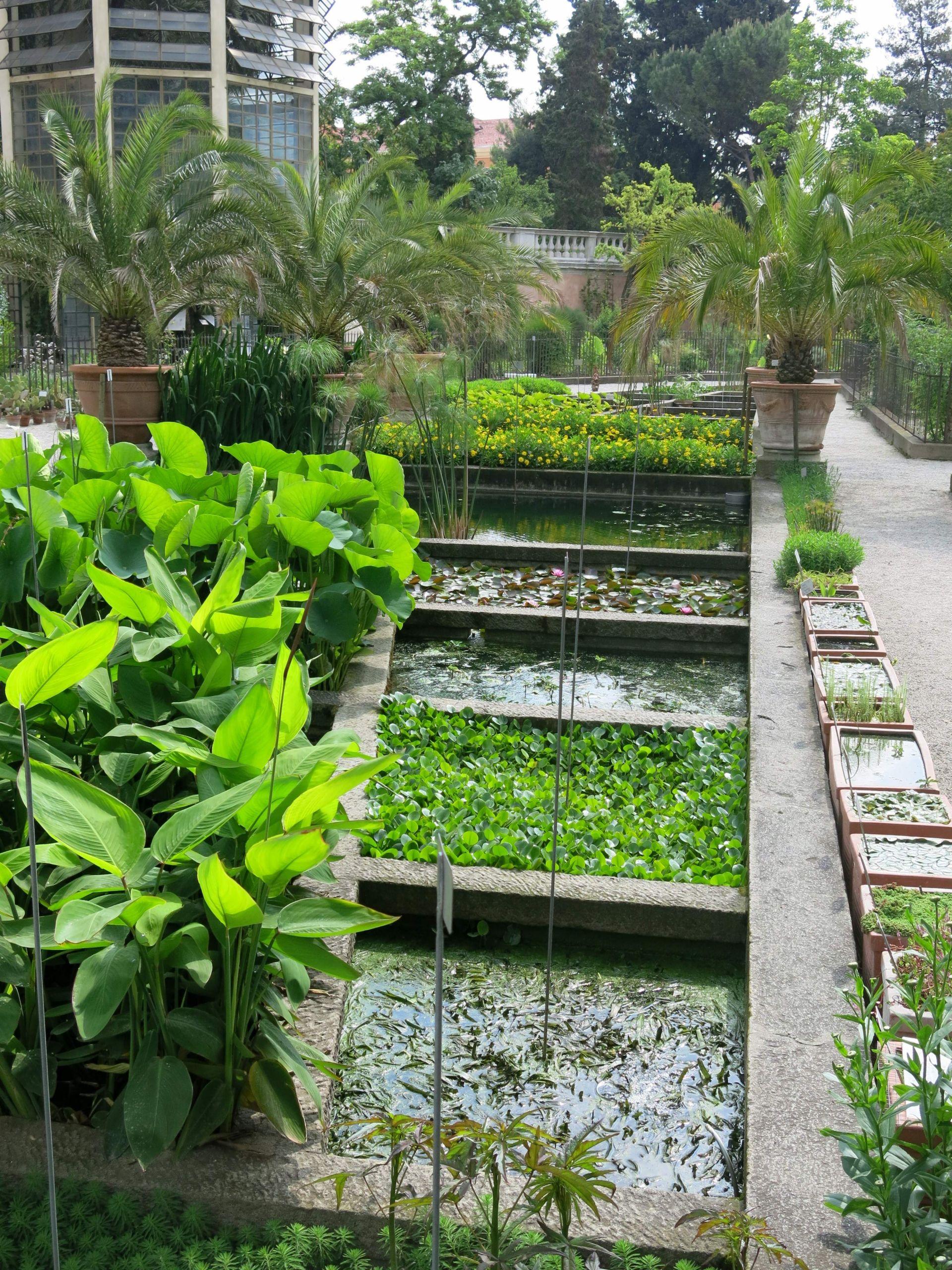 Bot Garten Padua Teiche