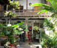 Botanischer Garten Puerto De La Cruz Das Beste Von Fahrt In Den nordwesten Teneriffas Tipps Für Kreuzfahrer