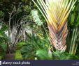 Botanischer Garten Puerto De La Cruz Genial Botanico E Stockfotos & Botanico E Bilder Alamy