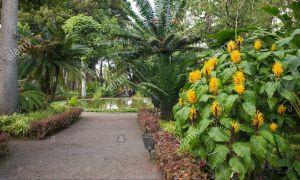 35 Schön Botanischer Garten Puerto De La Cruz Einzigartig