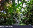 Botanischer Garten Puerto De La Cruz Luxus Botanical Garden Jardin Botanico In Stockfotos & Botanical