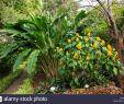 Botanischer Garten Puerto De La Cruz Schön Botanico E Stockfotos & Botanico E Bilder Alamy