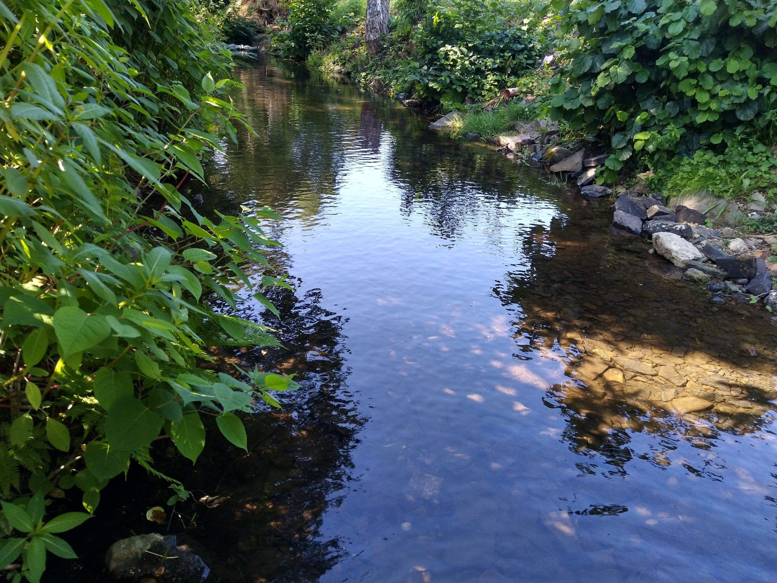 Aubach im Sommer bei normalem Wasserstand