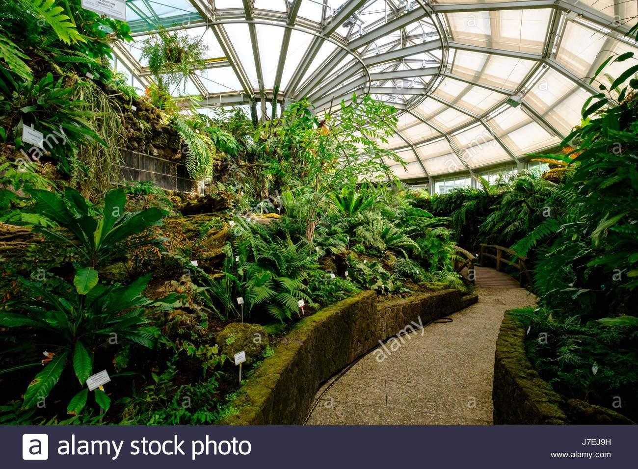 viele sorten von farn im gewachshaus im berliner botanischen garten in dahlem berlin deutschland j7ej9h