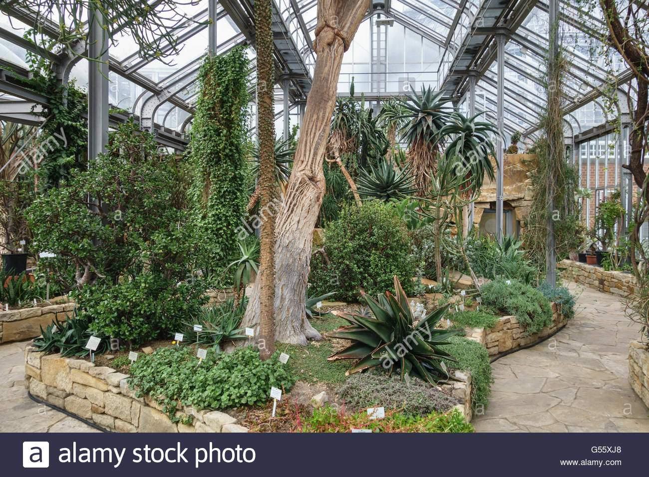 berlin deutschland der botanische garten berlin dahlem afrikanische sukkulenten in den wichtigsten tropischen gewachshaus g55xj8