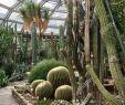 Botanischer Garten Und Botanisches Museum Berlin Dahlem Frisch Berliner Botanischer Garten Stockfotos & Berliner
