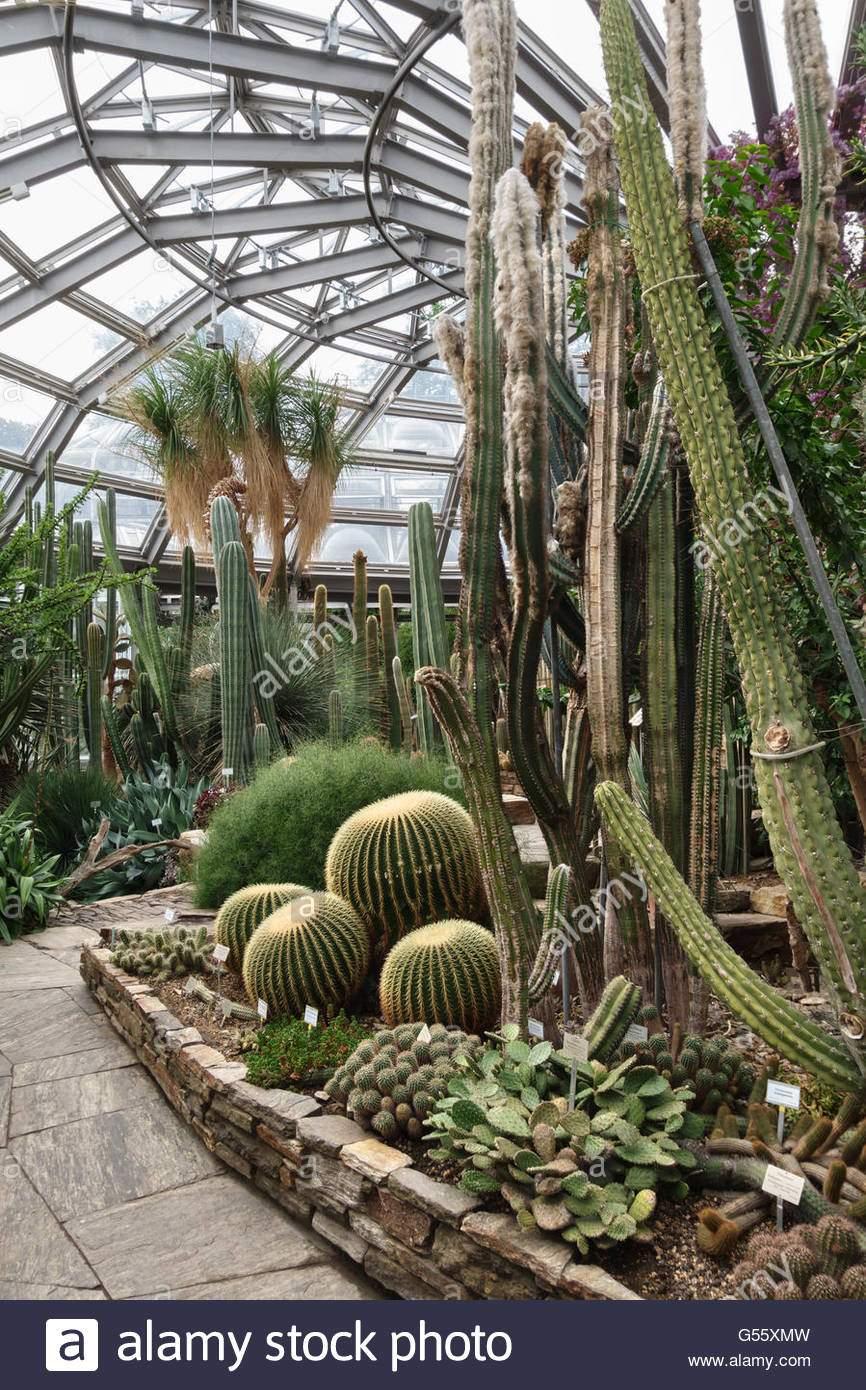 berlin deutschland der botanische garten berlin dahlem afrikanische sukkulenten kakteen in den wichtigsten tropischen gewachshaus g55xmw